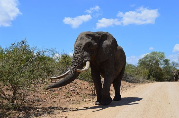 Wild elephant, animal, wildlife wallpaper
