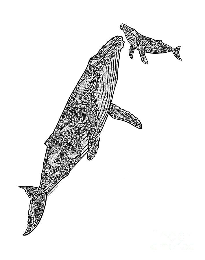 25 Best Ideas About Whale Drawing On Pinterest