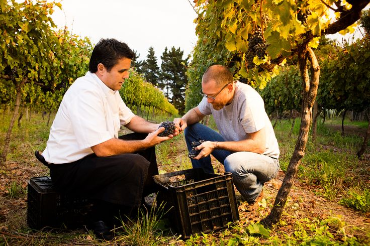Adam Mason showing Peter Tempelhoff how it's done in the vineyards.