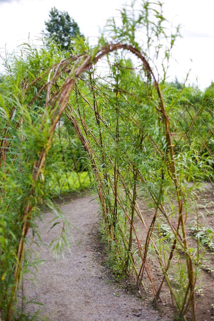3 x pajua puutarhaan - 3 x willow structures Text Anne Joutsenlahti-Lankinen, photos A-lehtien kuva-arkisto www.viherpiha.fi