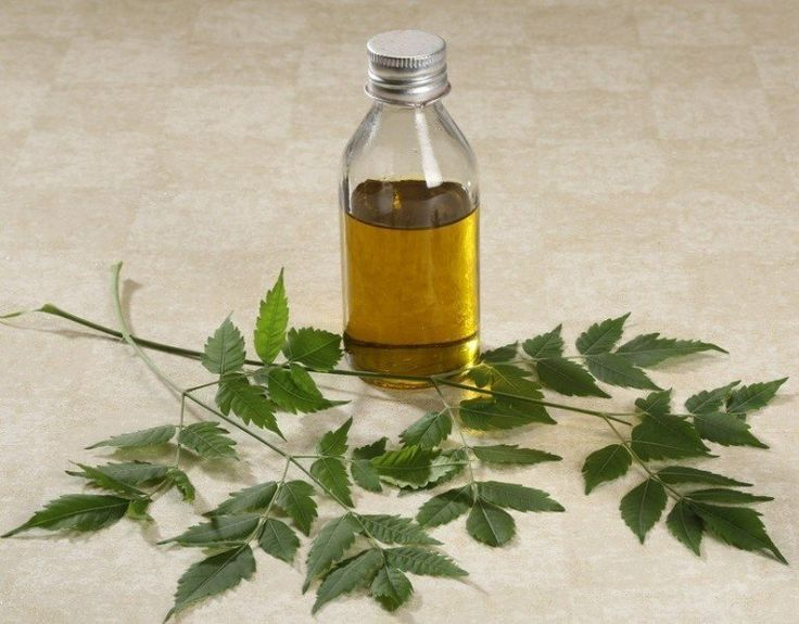 In India, #Neem is commonly cultivated in many home gardens and earlier days it was quite common in the backyard could meet most of their medical needs Use #NeemOil for #skin and #hair