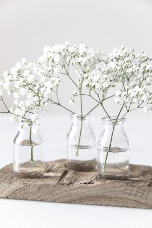Gypsophila paniculata | White Flowers | Flowers & Greens