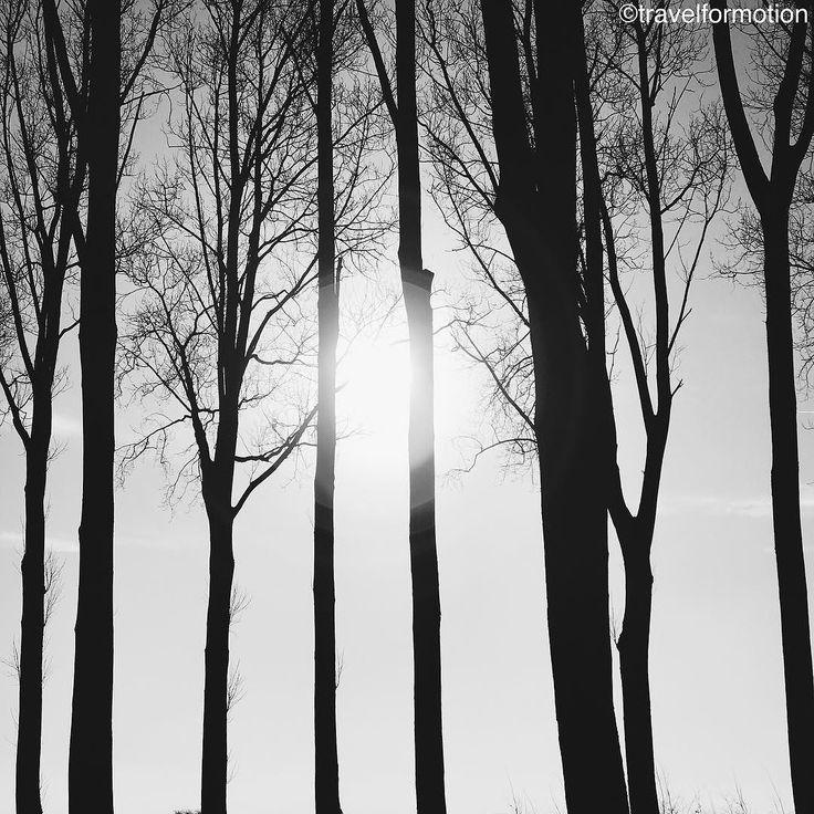 #winter is a season of recovery and preparation #trees in #blackandwhite #blackandwhitephotography #vsco #vscocam #wintersun #belgium #igbelgium #belgium_unite #visitflanders #flanders #fields #landscape #sun #silhouette #wanderlust #travel #travelgram