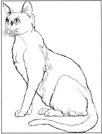 Cat 4 Coloring Page From Cats Category Select 25487 Printable Crafts Of Cartoons Nature Animals Bible And Many More