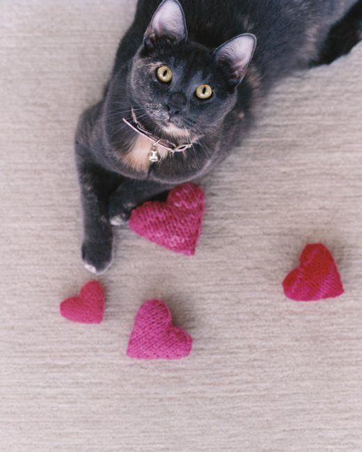 Knitted Catnip Delight