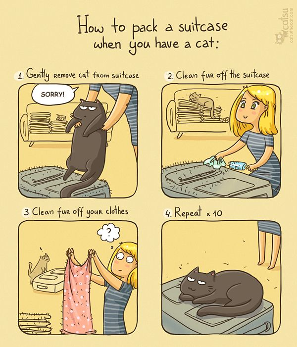 The one about consistency | Catsu The Cat is packing for CatConLA in 2016.