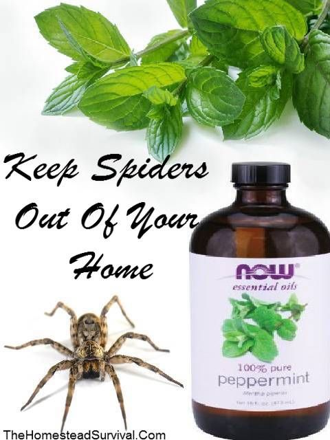 Keep Spiders Out Of Your Home – Peppermint » The Homestead Survival