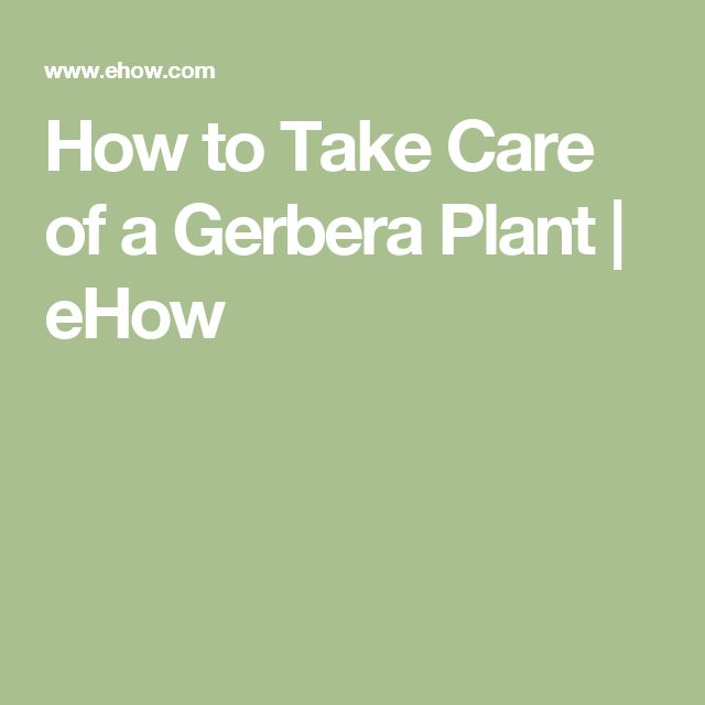 How to Take Care of a Gerbera Plant | eHow