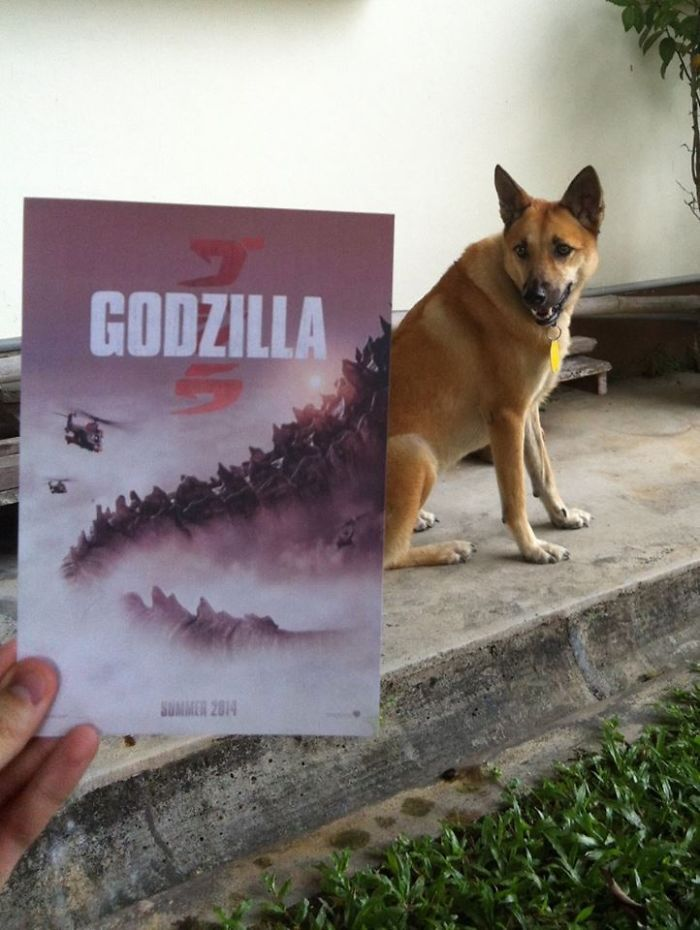 Instagrammer Combines Famous Movie Posters With Real-Life Puppies | Bored Panda