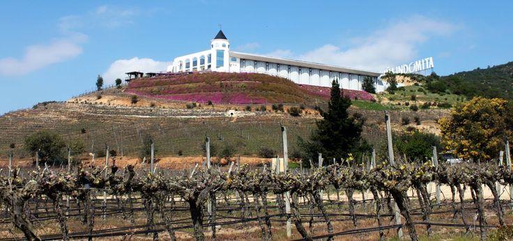 Fizemos um maravilhoso tour pela vinícola Indômita, onde se cultivam as diferentes variedades de uvas como:Sauvignon Blanc, Chardonay e a teimosa Pinot Noir.