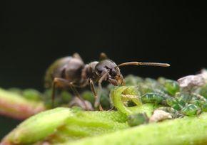 Cómo matar hormigas en un jardín sin pesticidas | eHow en Español