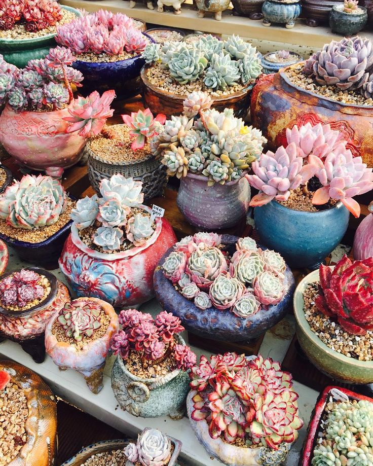 1248 best endless succulent ideas images on pinterest succulents succulents and pretty pots workwithnaturefo