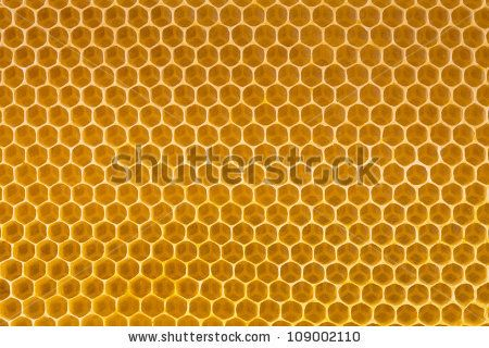 bee honey in honeycomb - stock photo