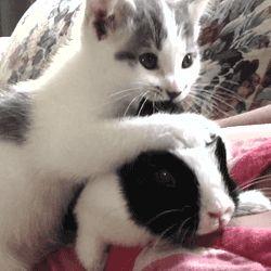 【※腹筋注意】最高の猫gif&猫動画貼ってけにゃん【  癒し祭り】 : 鬼女はみた -修羅場・恋愛・育児系まとめサイト-