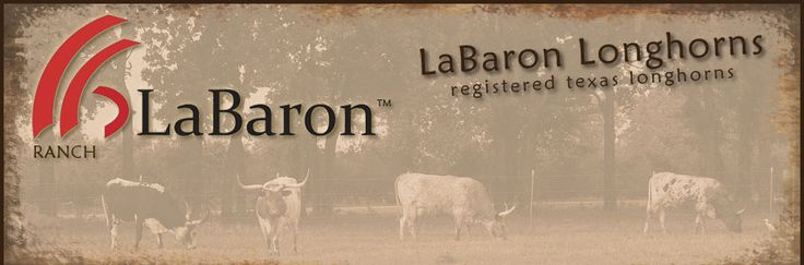 Labaron Ranch, Labaron Longhorns - Registered Texas Longhorns Argyle, TX