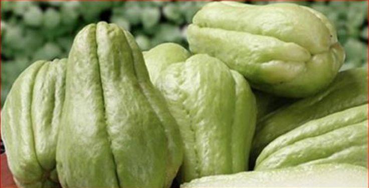 Para a grande maioria das pessoas, o chuchu não está entre os alimentos preferidos.Dizem que ele não tem gosto, tampouco é atrativo.No entanto, provavelmente a opinião seria outra se todos soubessem o quanto esse vegetal é magnífico para nossa saúde.