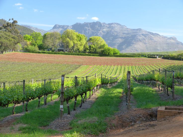 Thelema Mountain Vineyards, Cape