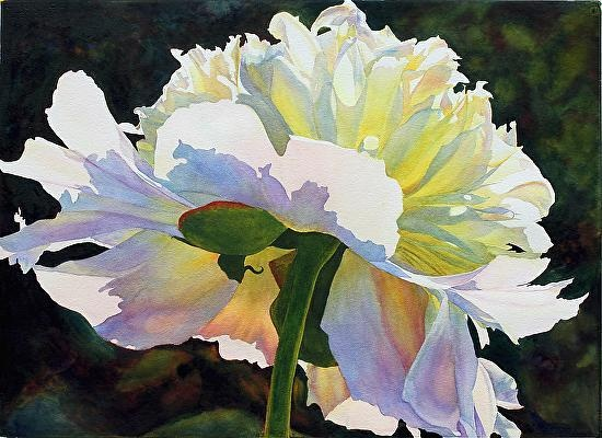 """I love the warmth & transparency of this! Backlit Beauty by Cathy Hillegas """"Backlit Beauty"""" peony"""