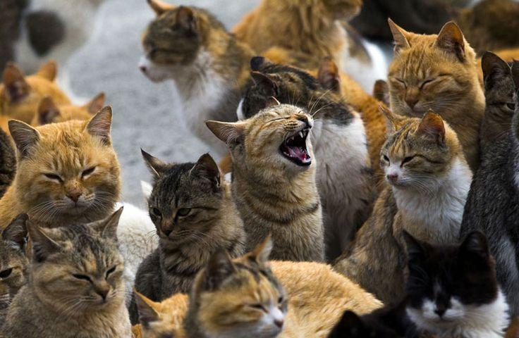isla de japón en la que viven muchos gatos