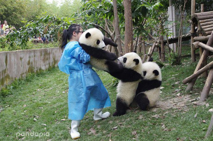 How to become a long-leg panda