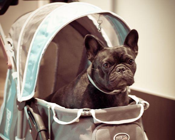 Cochecito para perros, un invento que nos acompa�ar� en nuestros viajes en autocaravana