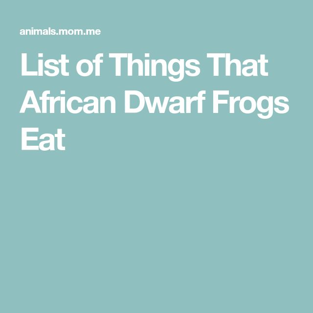 List of Things That African Dwarf Frogs Eat