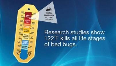 Bedbug Heat Treatment