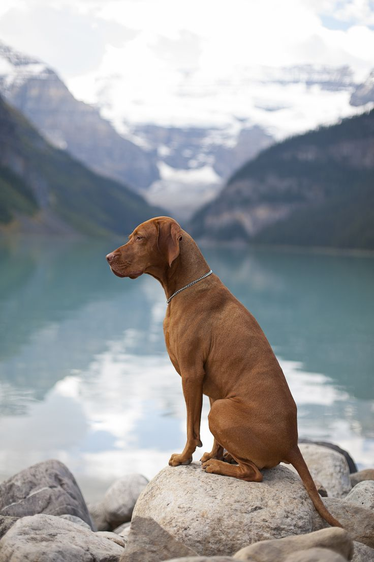 Watching the view with my future dog, a vizsla
