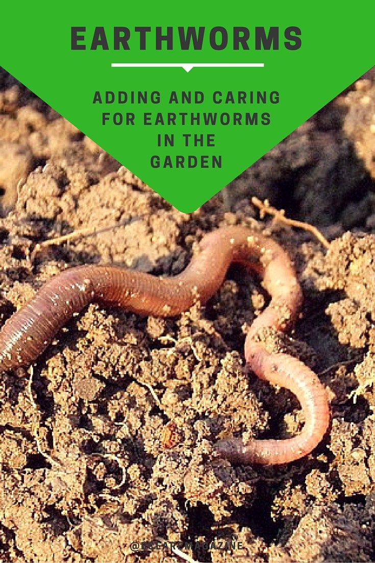 Adding And Caring For Earthworms In The Garden Earthworms