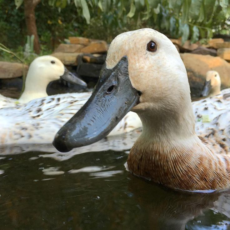 169 best curb yard appeal images on pinterest for Homemade biofilter for duck pond