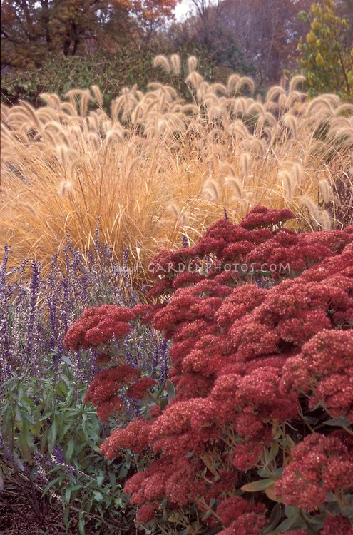 326 best images about plant combinations on pinterest for Planting schemes with grasses