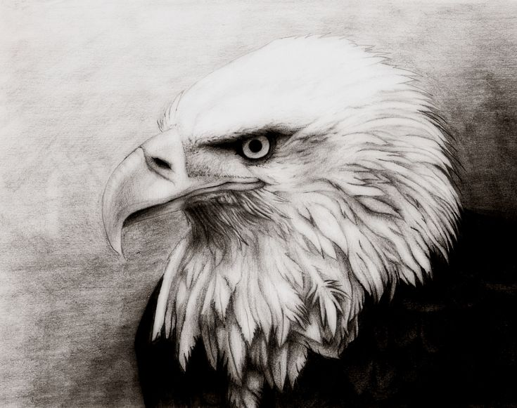 17 Images About Eagle Drawing And Painting On Pinterest