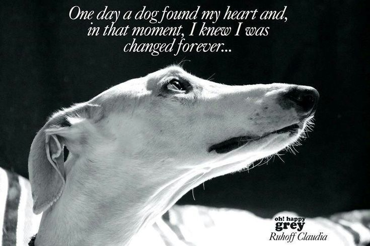 One Day A Dog Found My Heart And In That Moment I Knew I Was Changed Forever Grey Hound Dog Greyhound Dogs
