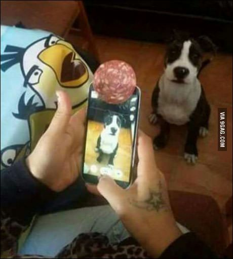 Trick for a nice pic of your pet | See more fun videos here: http://gwyl.io/