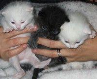 Comment se passe la reproduction chez le #chat ? - #Blog #zoomalia http://www.zoomalia.com/blog/article/reproduction-gestation-du-chat.html