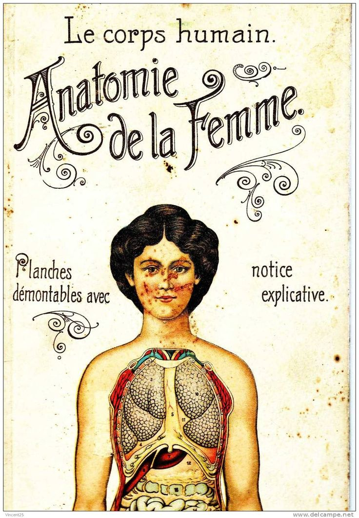 Anatomie de la femme  Illustration retro vintage