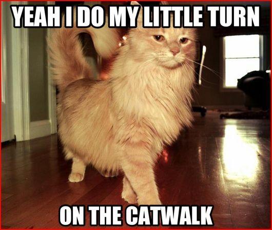 Funny Cat Door