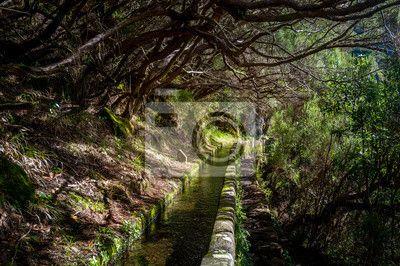 Levada water stream in rabacal hiking route, madeira island. na obrazach myloview. Najlepszej jakości fototapety, kolekcje myloview, naklejki, obrazy, plakaty. Chcesz ozdobić swój dom? Tylko z myloview!