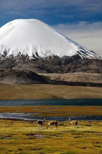 Lake Chungara, Lauca National Park Chile, Parinacota volcano in the background.  It has over 140 bird species and many species of animals and plants.