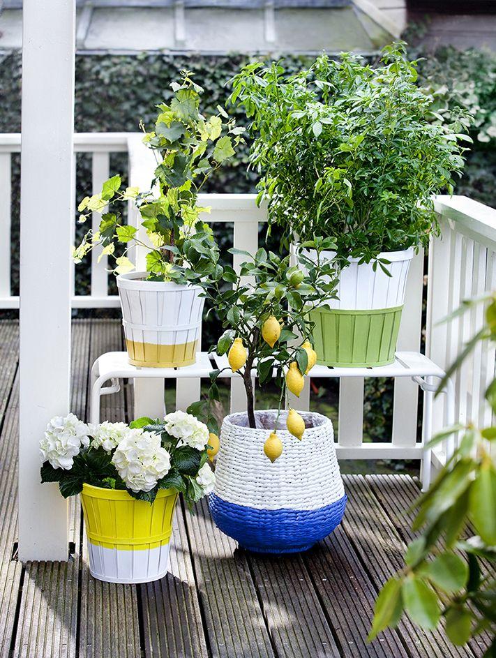 29 besten Tuin Bilder auf Pinterest Gärten, Garten und