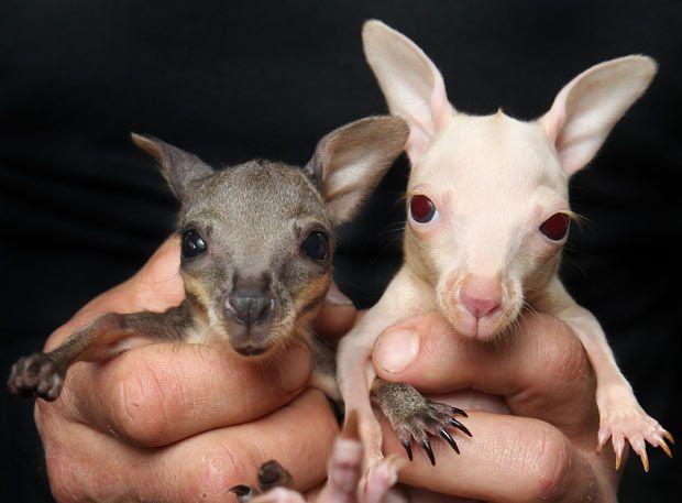 Baby Animals Being Born