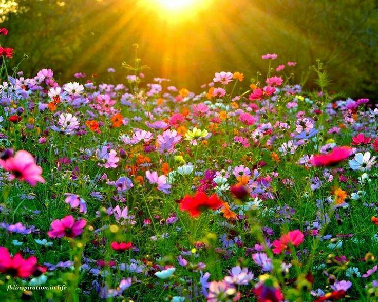 Fotos De Jardines De Flores. Elegant Jardines De Flores With Fotos ...