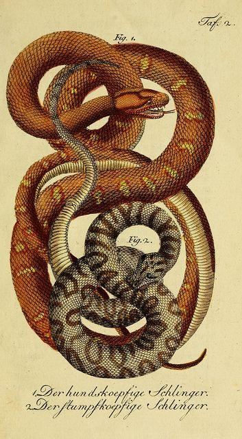Herrn de la Cepede's Naturgeschichte der Amphibien, oder der enerlegenden vierfussigen Thiere und der Schlangen :. Weimar :Verlage des Indus...