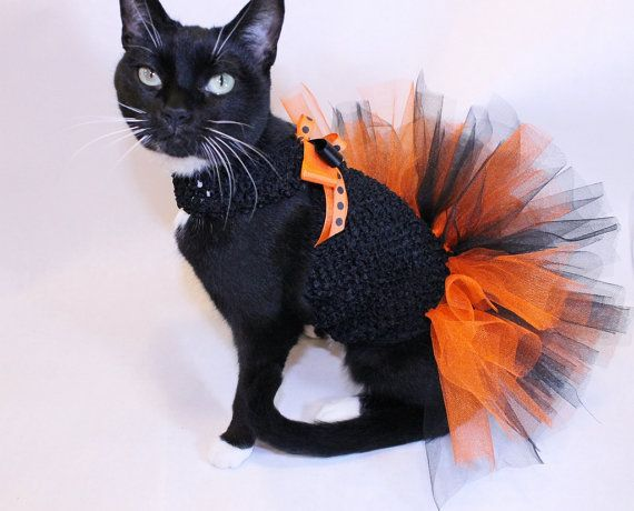 Cat Clothes Orange and Black Halloween by RockinDogsCoolCats