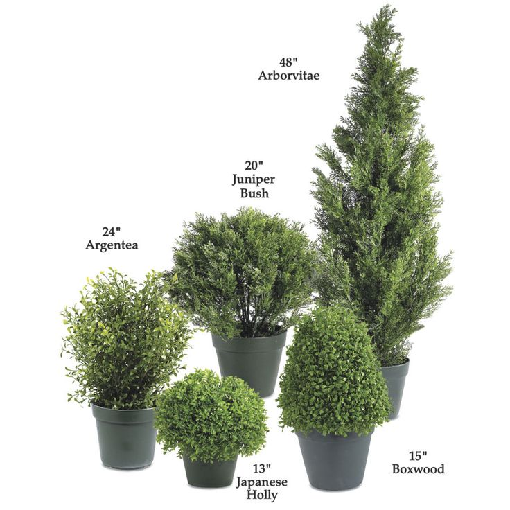 Just add some Fantasia Fairy Lights or Fairy Berries and TWINKLE year round!  Twenty Four Inch Argentea Plant - Furniture, Home Decor & Home Furnishings, Home Accessories & Gifts | Expressions