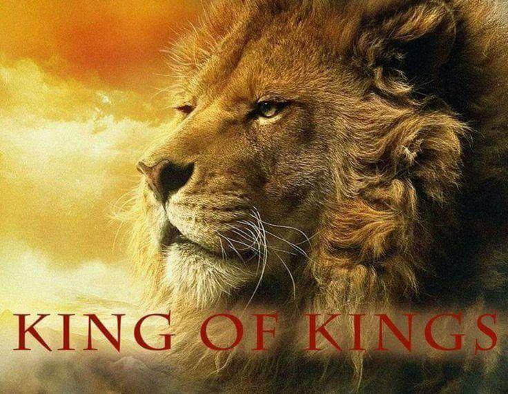 One Day image by Dawn Marie Aslan narnia, Lion of judah
