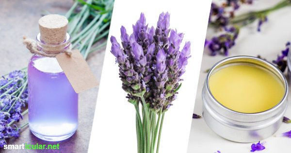 1154 best lavandula angustifolia images on pinterest soaps lavender and beauty hacks. Black Bedroom Furniture Sets. Home Design Ideas