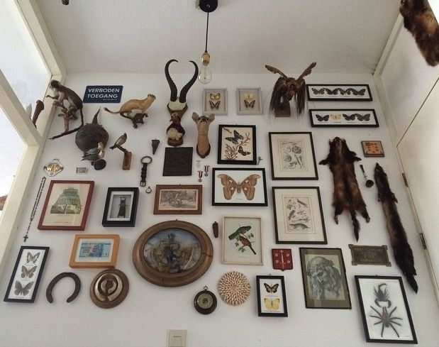 Full wall display of taxidermy, skulls, insect mounts, antique animal prints, etc.