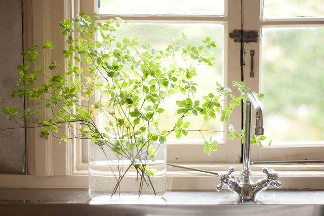 Window Sill Gardening I Wanna Live It Pinterest