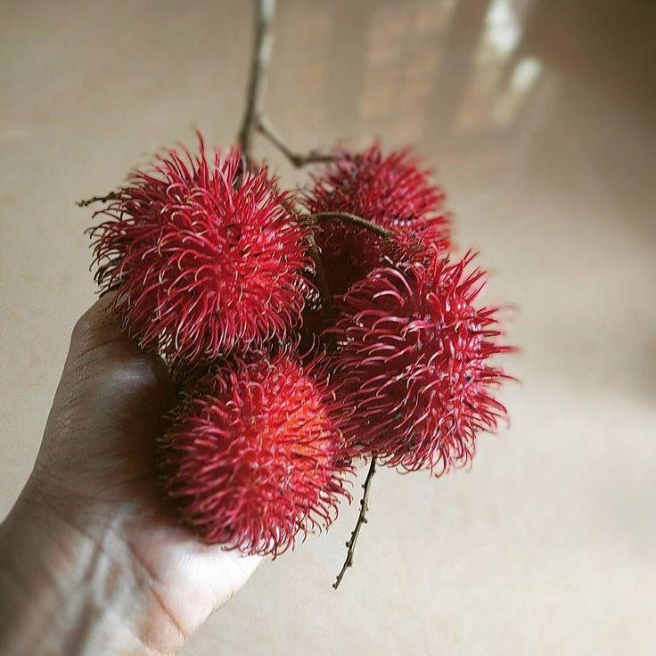 Rambutan   #srilankan #srilankaise #srilanka wanderlust #home #instalike #instagood #instagramcommunity #picoftheday #ceylon #instasrilanka #igerssrilanka  #bestoftheday #rambutan #fruit #tropical